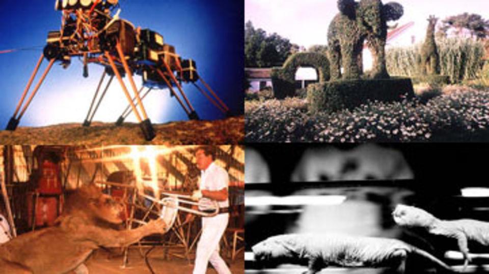 ״מהיר זול וחסר מעצורים״: מאלף אריות, מעצב גנים, מהנדס רובוטיקה ומומחה לחולדות.